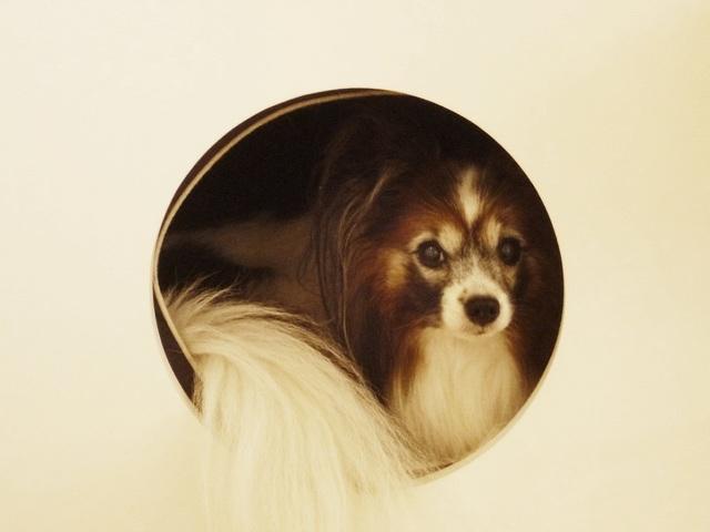 穴の中に入る犬
