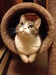 輪から顔を出す猫