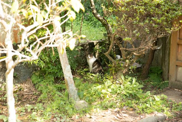 庭にいた猫
