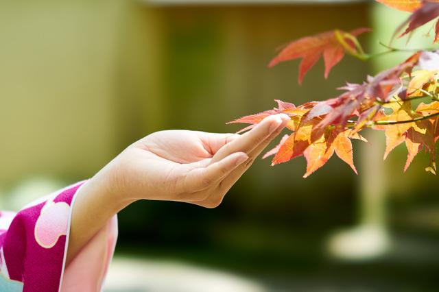 紅葉に手を添える