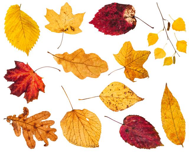 色々な紅葉した葉