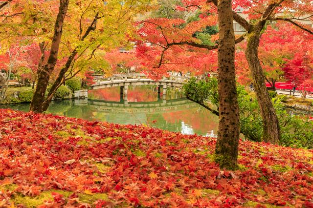 紅葉の綺麗な風景