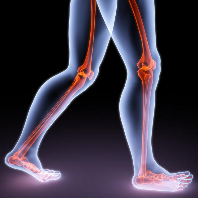 足のスケルトン図
