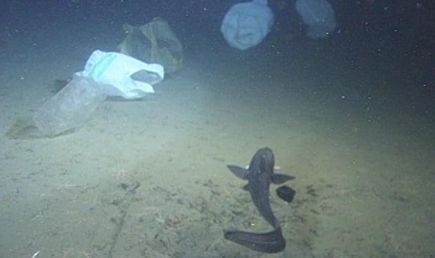 1999年10月/相模湾 初島沖 水深約1340mの様子