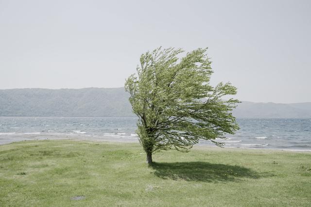 強風に耐える木