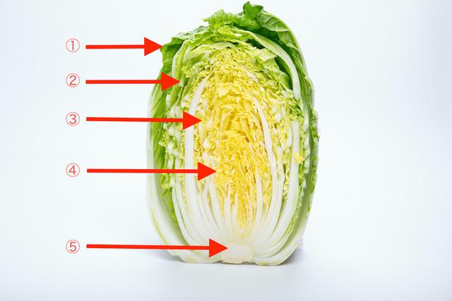 白菜の部位