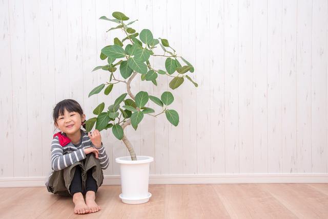 鉢植えの木