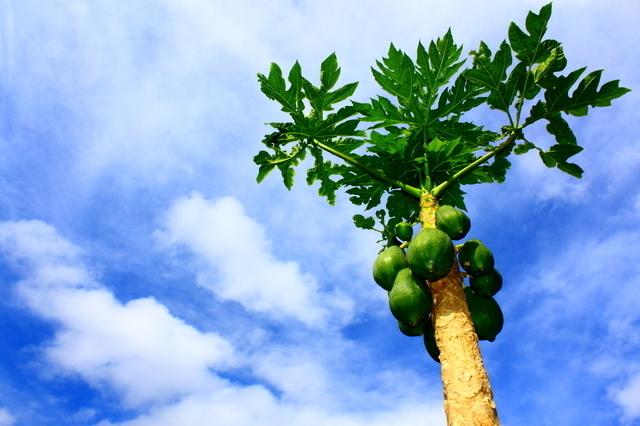 冷凍で保存しないほうが良いフルーツとは(イメージ)