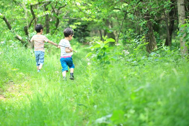森で遊ぶ子どもたち