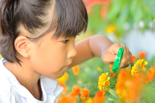 虫眼鏡で花を観察する子ども
